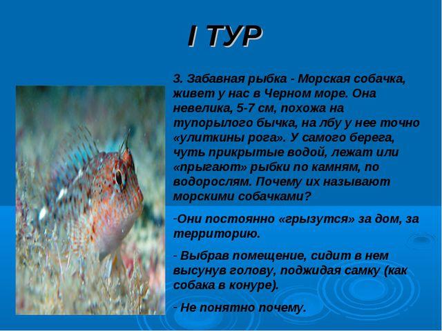 I ТУР 3. Забавная рыбка - Морская собачка, живет у нас в Черном море. Она нев...
