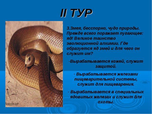 II ТУР 3.Змея, бесспорно, чудо природы. Прежде всего поражает пугающее: яд! В...