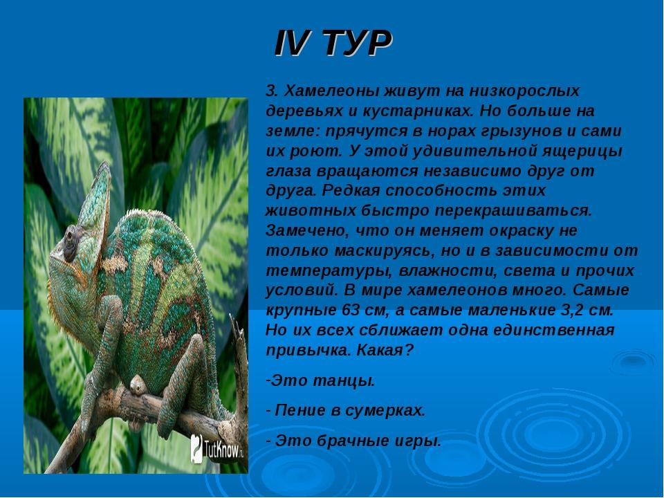 IV ТУР 3. Хамелеоны живут на низкорослых деревьях и кустарниках. Но больше на...