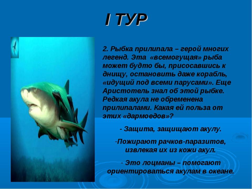 I ТУР 2. Рыбка прилипала – герой многих легенд. Эта «всемогущая» рыба может б...