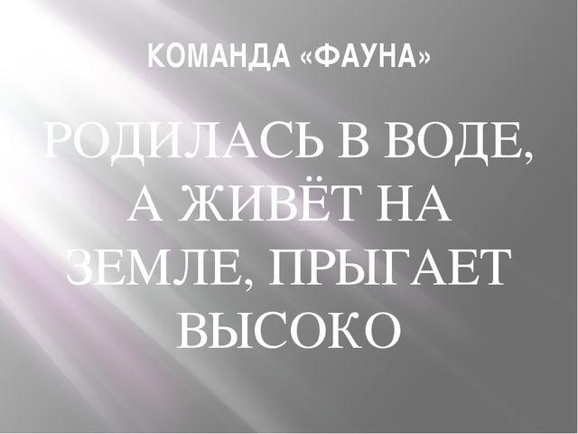 КОМАНДА «ФАУНА» РОДИЛАСЬ В ВОДЕ, А ЖИВЁТ НА ЗЕМЛЕ, ПРЫГАЕТ ВЫСОКО
