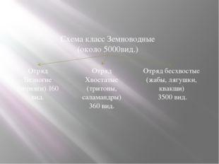 Размножение и многообразие земноводных Схема класс Земноводные (около 5000вид