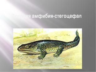 Древняя амфибия-стегоцефал Размножение и многообразие земноводных
