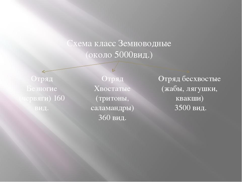 Размножение и многообразие земноводных Схема класс Земноводные (около 5000вид...