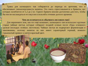 Травы для калмыцкого чая собираются до периода их цветения, что и обеспечивае