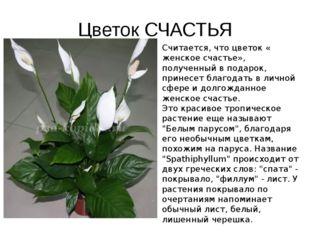 Цветок СЧАСТЬЯ Считается, что цветок « женское счастье», полученный в подарок