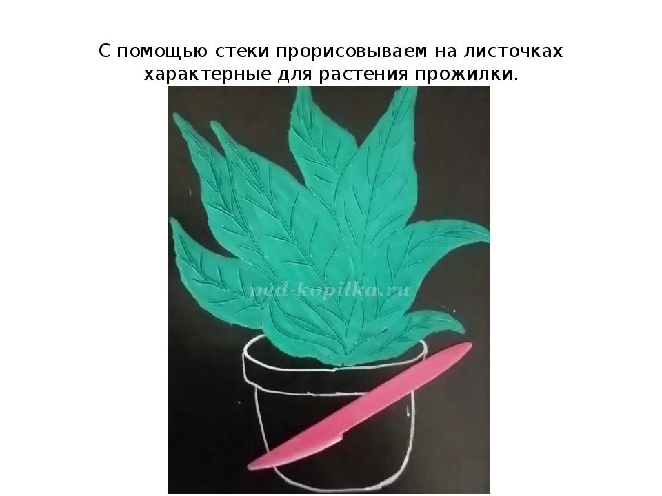 С помощью стеки прорисовываем на листочках характерные для растения прожилки.