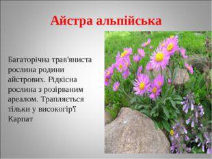 Айстра альпійська Багаторічна трав'яниста рослина родини айстрових. Рідкісна