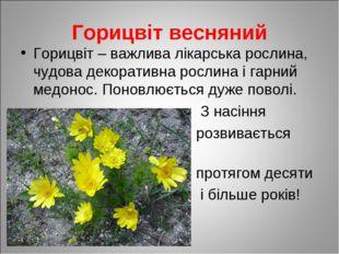 Горицвіт весняний Горицвіт – важлива лікарська рослина, чудова декоративна ро