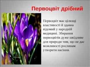 Первоцвіт дрібний Первоцвіт має цілющі властивості й здавна відомий у народн