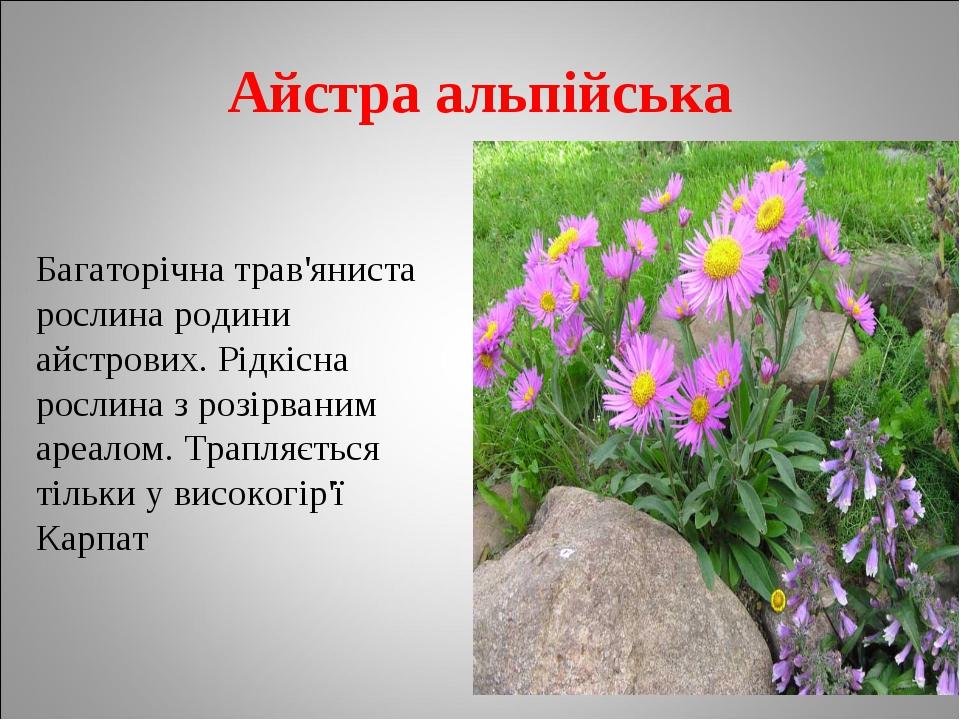 Айстра альпійська Багаторічна трав'яниста рослина родини айстрових. Рідкісна...