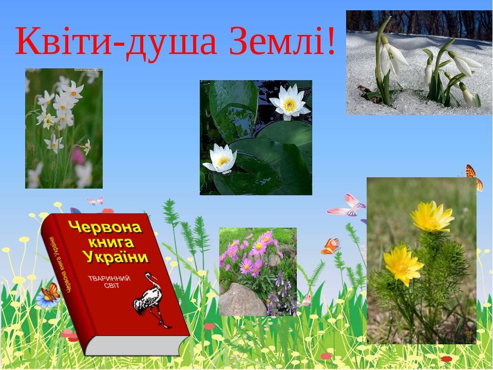 Квіти-душа Землі!
