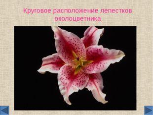 Круговое расположение лепестков околоцветника
