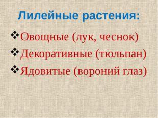 Лилейные растения: Овощные (лук, чеснок) Декоративные (тюльпан) Ядовитые (вор