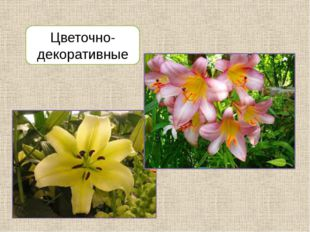 Цветочно-декоративные