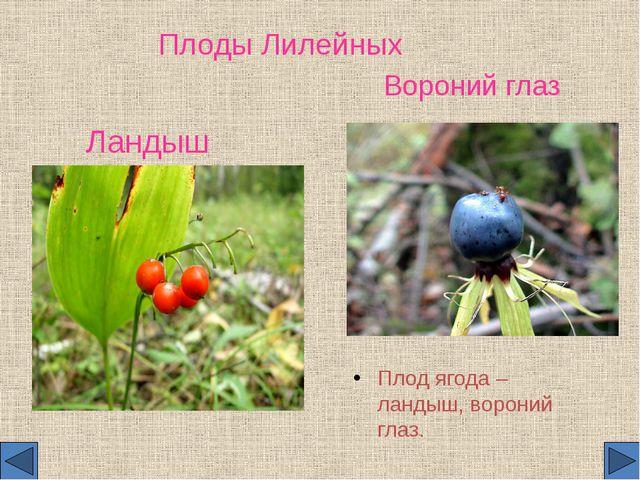 Плоды Лилейных Плод ягода – ландыш, вороний глаз. Вороний глаз Ландыш