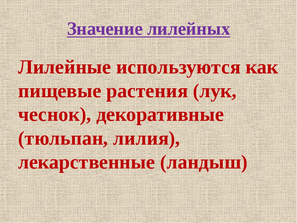 Значение лилейных Лилейные используются как пищевые растения (лук, чеснок), д...