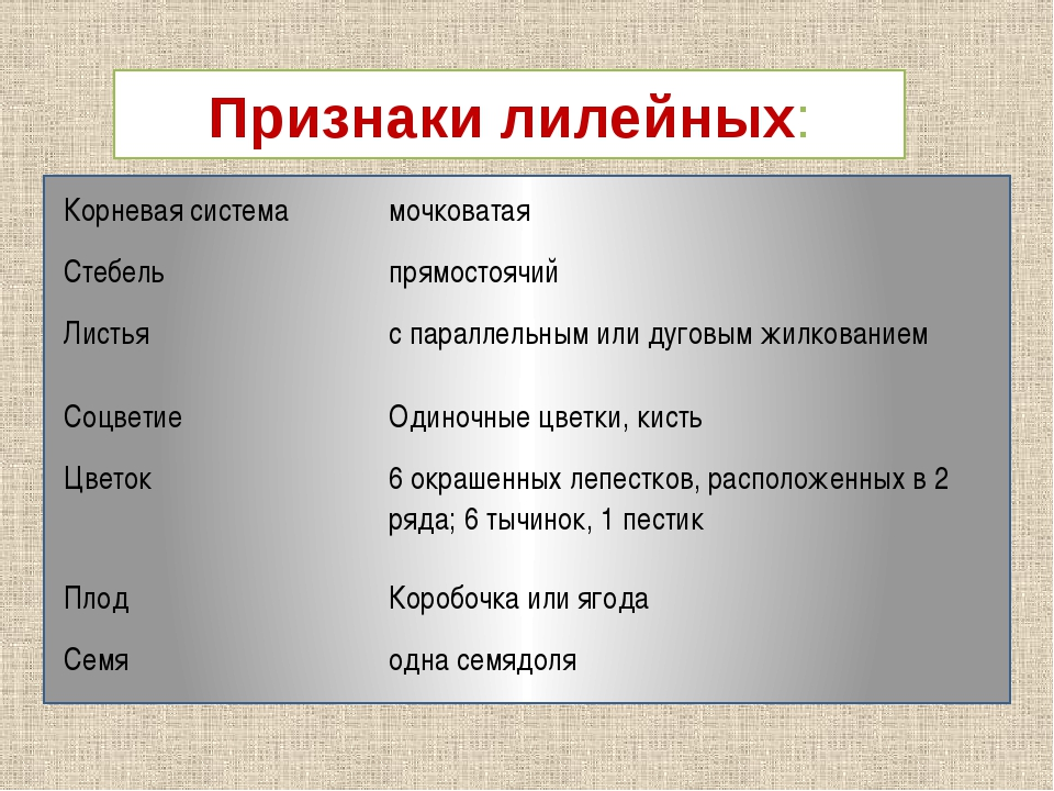 Признаки лилейных: Корневая система мочковатая Стебель прямостоячий Листья с...