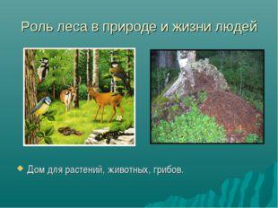 Роль леса в природе и жизни людей Дом для растений, животных, грибов.