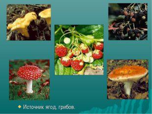 Источник ягод, грибов.