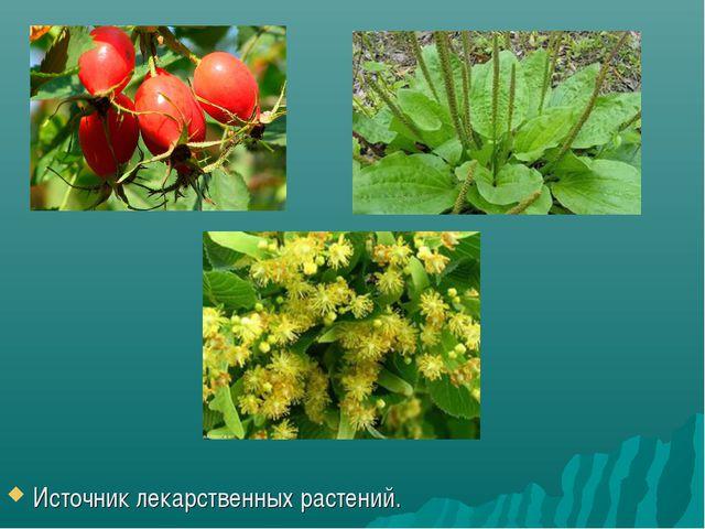Источник лекарственных растений.