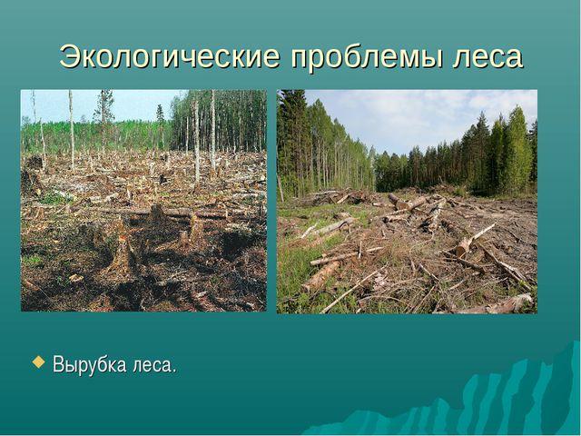 Экологические проблемы леса Вырубка леса.