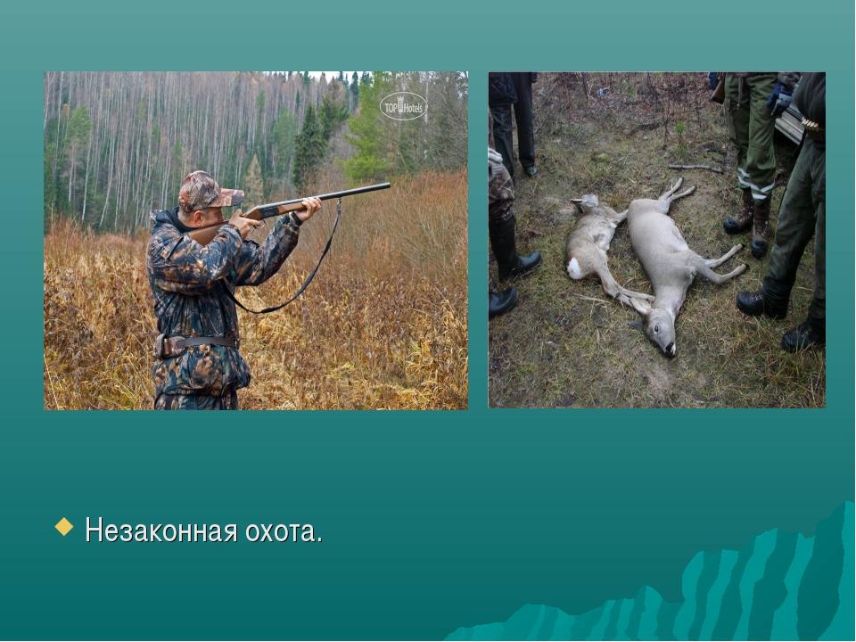 Незаконная охота.