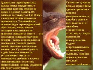 Дьяволы не территориальны, однако имеют определенные владения, которые обходя