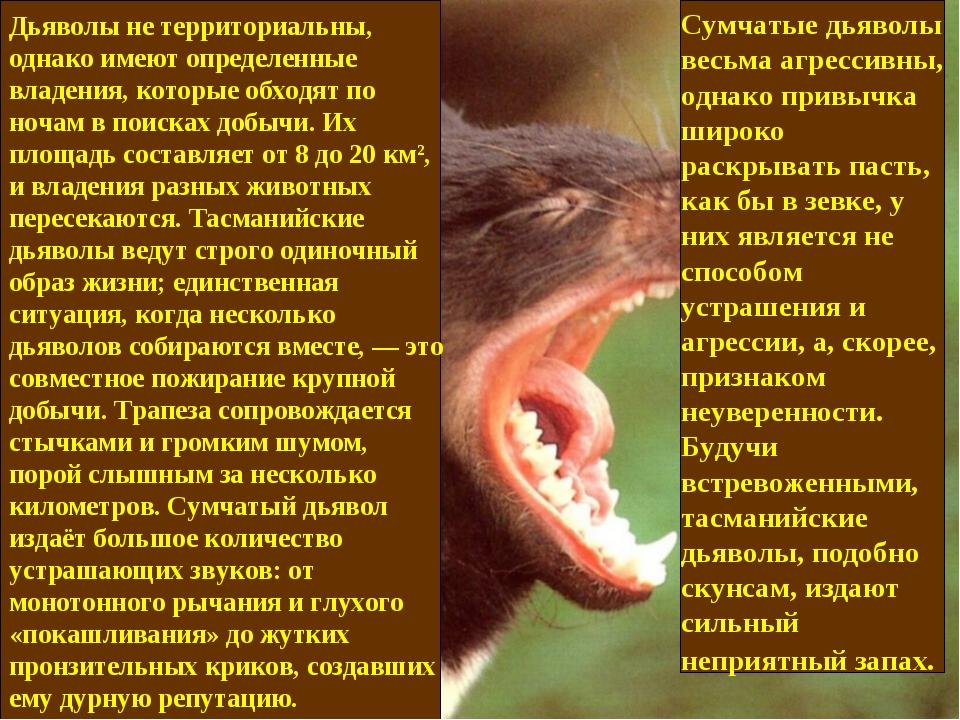Дьяволы не территориальны, однако имеют определенные владения, которые обходя...