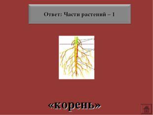 «корень»