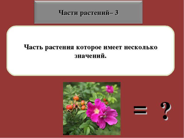 Часть растения которое имеет несколько значений. = ?