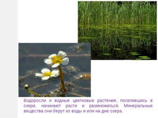 Водоросли и водные цветковые растения, поселившись в озере, начинают расти и