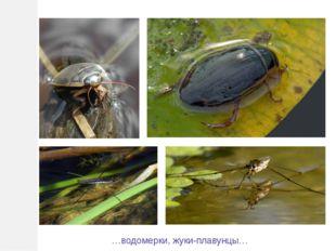 …водомерки, жуки-плавунцы…