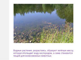 Водные растения, разрастаясь, образуют зелёную массу, которая обогащает воду