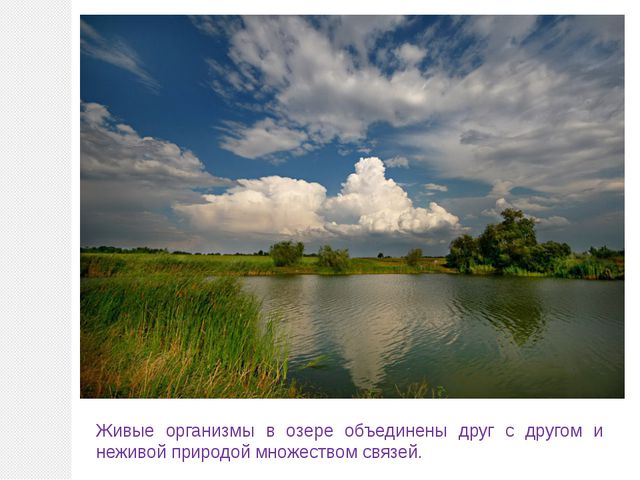 Живые организмы в озере объединены друг с другом и неживой природой множество...