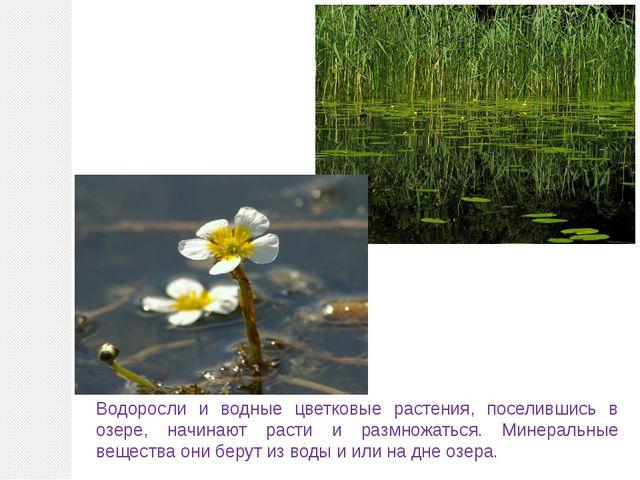 Водоросли и водные цветковые растения, поселившись в озере, начинают расти и...