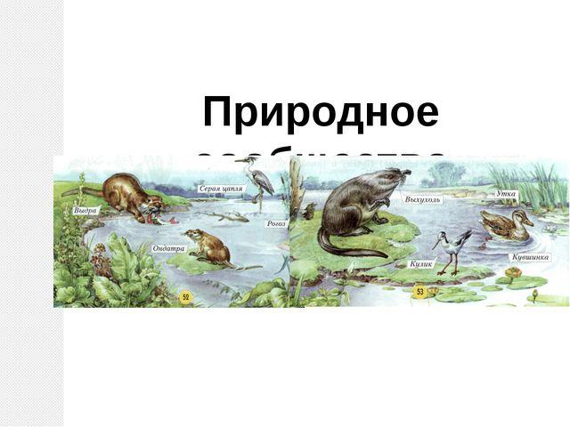 Природное сообщество озеро