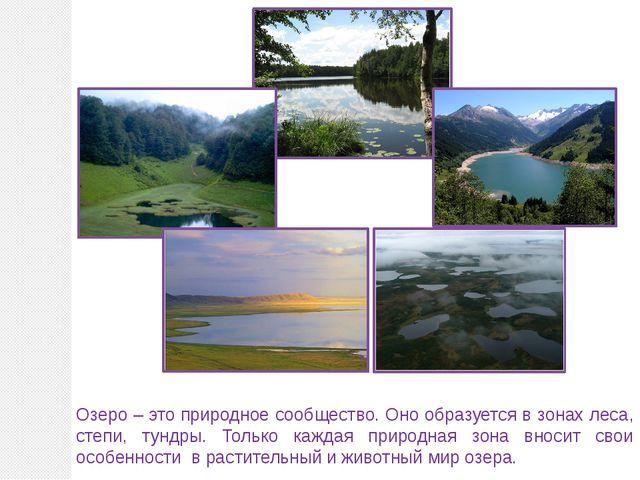 Озеро – это природное сообщество. Оно образуется в зонах леса, степи, тундры....