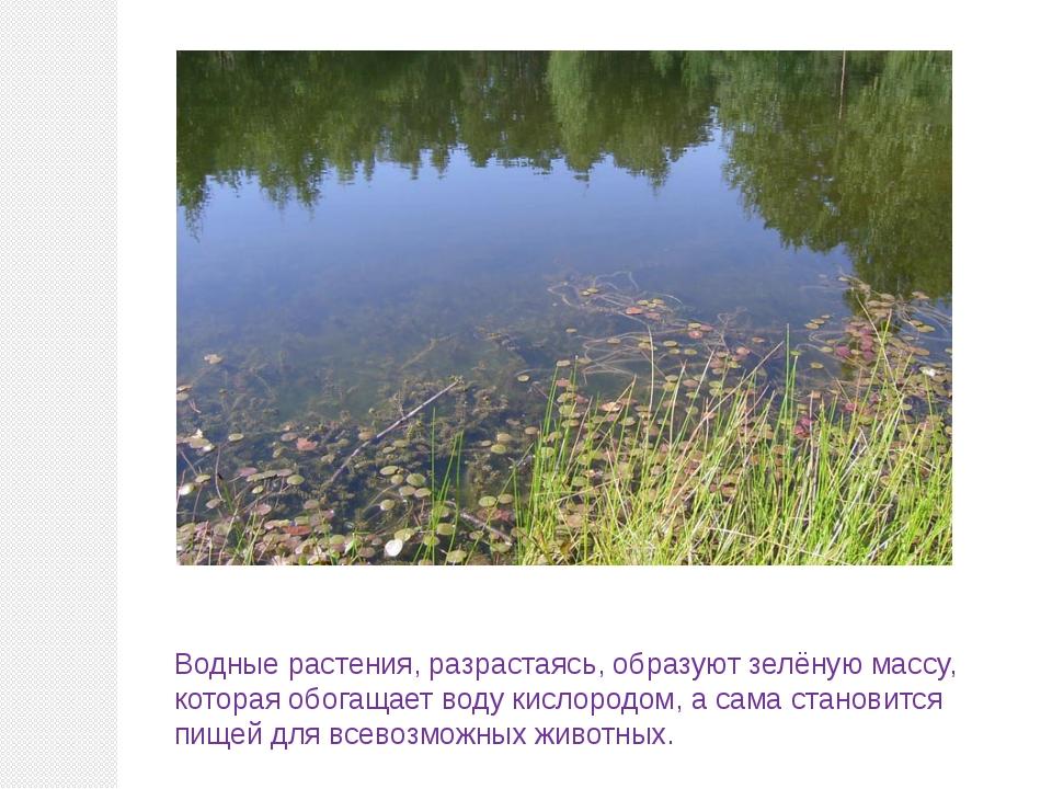 Водные растения, разрастаясь, образуют зелёную массу, которая обогащает воду...