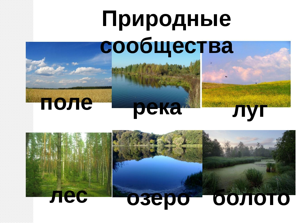 Природные сообщества поле река луг лес озеро болото