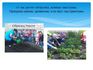 «У нас растет петрушка, зеленая хвастушка. Приправа пряная, ароматная, и на в