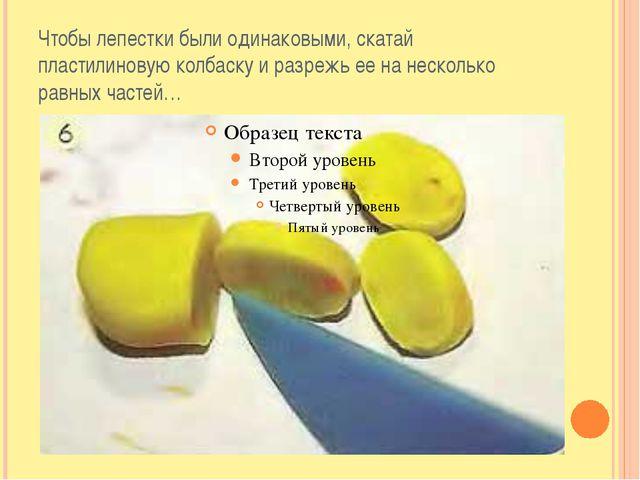 Чтобы лепестки были одинаковыми, скатай пластилиновую колбаску и разрежь ее н...