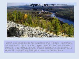 Река Печора во всей красе… Чистая, не оскверненная промышленностью Печора – н