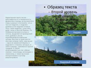 Характерная черта лесов – многоярусность и мозаичность. Древесные породы встр