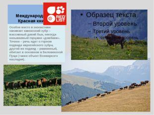Международная Красная книга Особое место в экосистеме занимает кавказский зуб