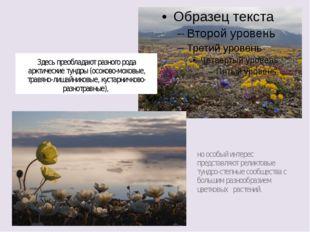 Здесь преобладают разного рода арктические тундры (осоково-моховые, травяно-л