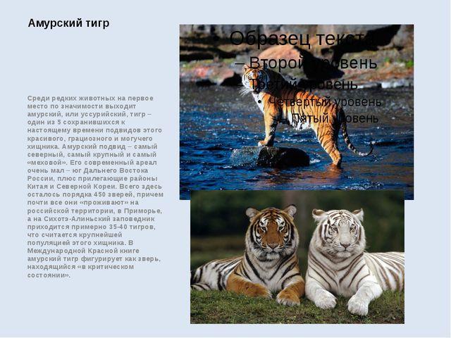 Среди редких животных на первое место по значимости выходит амурский, или усс...
