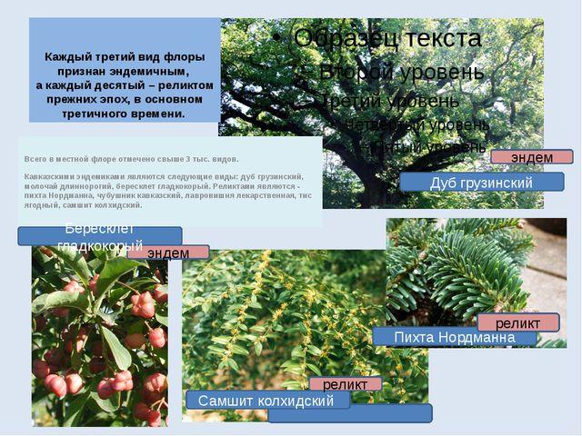 Каждый третий вид флоры признан эндемичным, а каждый десятый – реликтом прежн...