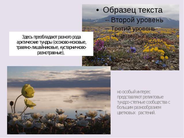 Здесь преобладают разного рода арктические тундры (осоково-моховые, травяно-л...