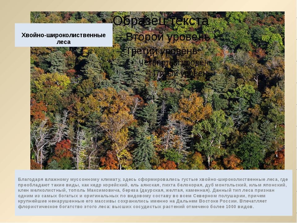 Хвойно-широколиственные леса Благодаря влажному муссонному климату, здесь сфо...